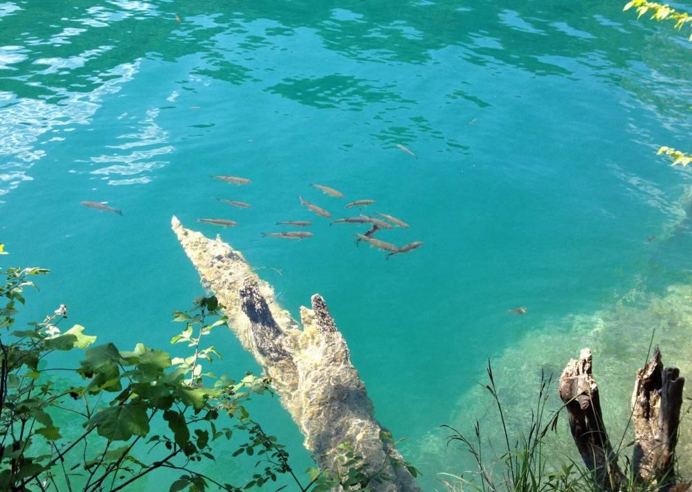 Plitvicer_Seen_Wasser