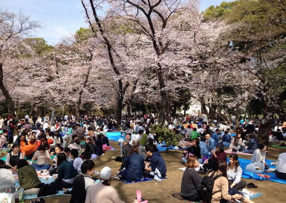 Japaner feiern Hanami im Ueno-Park