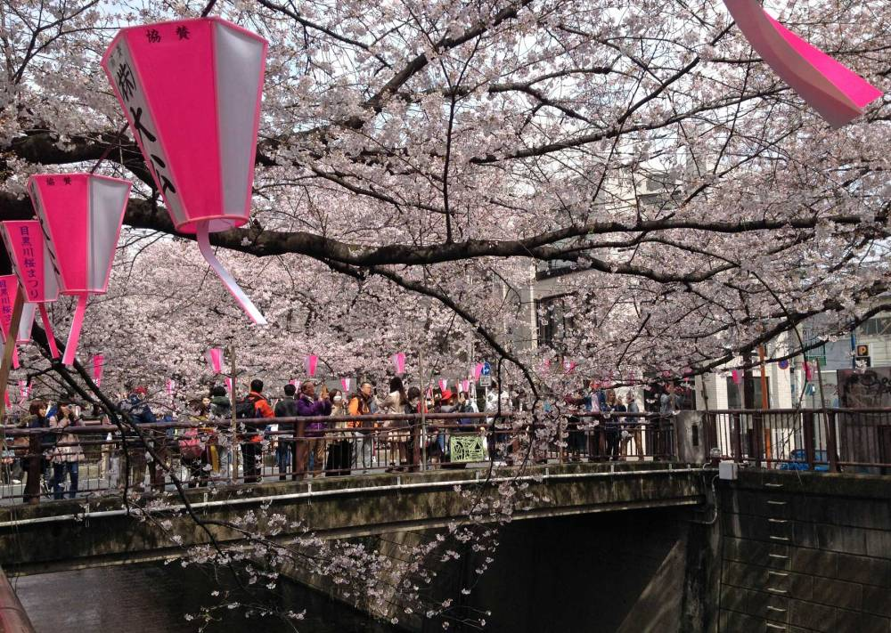 Kirschblüte am Naka-meguro-Kanal in Tokyo
