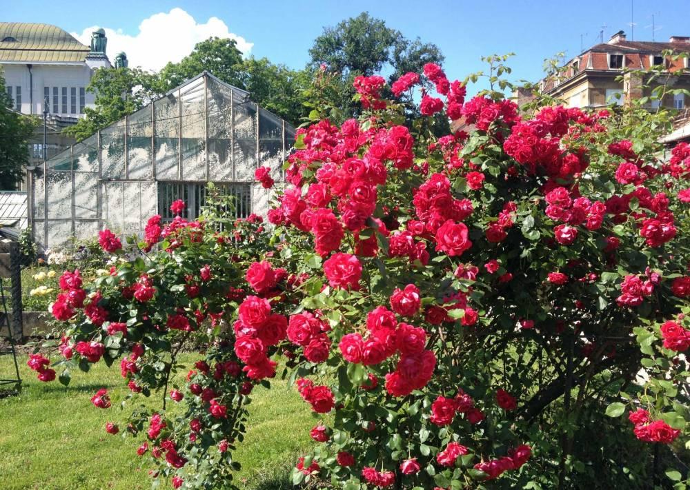 Der Botanische Garten Zagreb