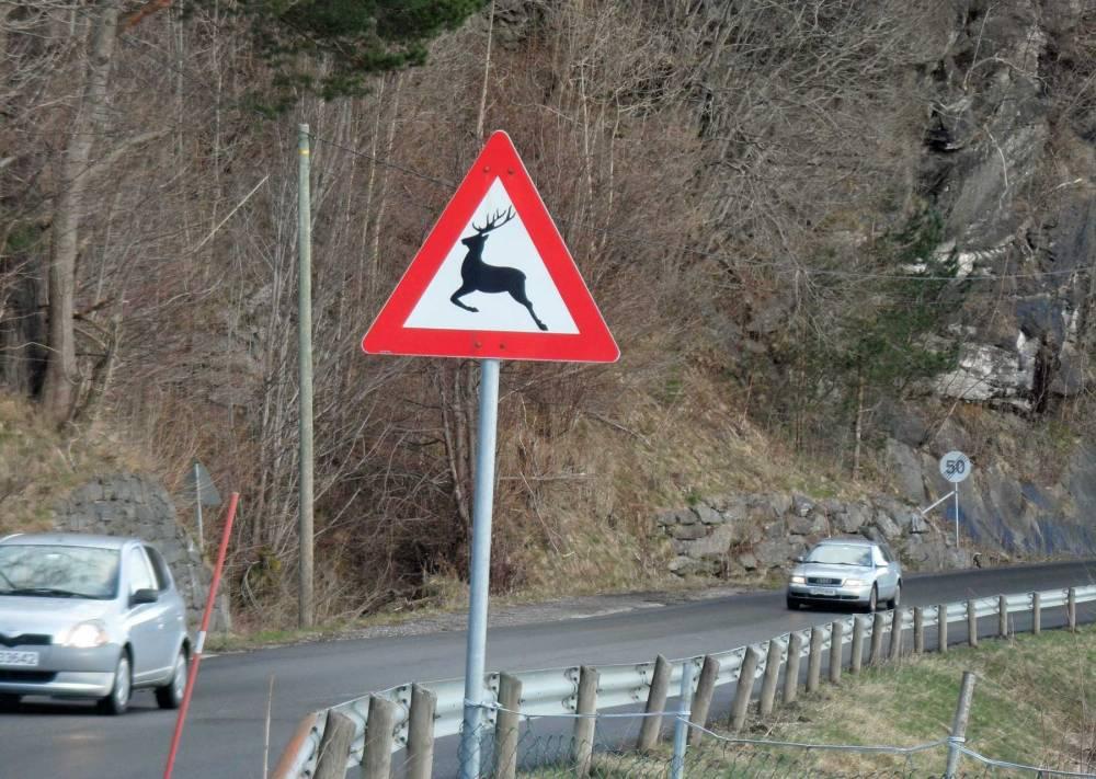 Straßenschild in Bergen mit Elch
