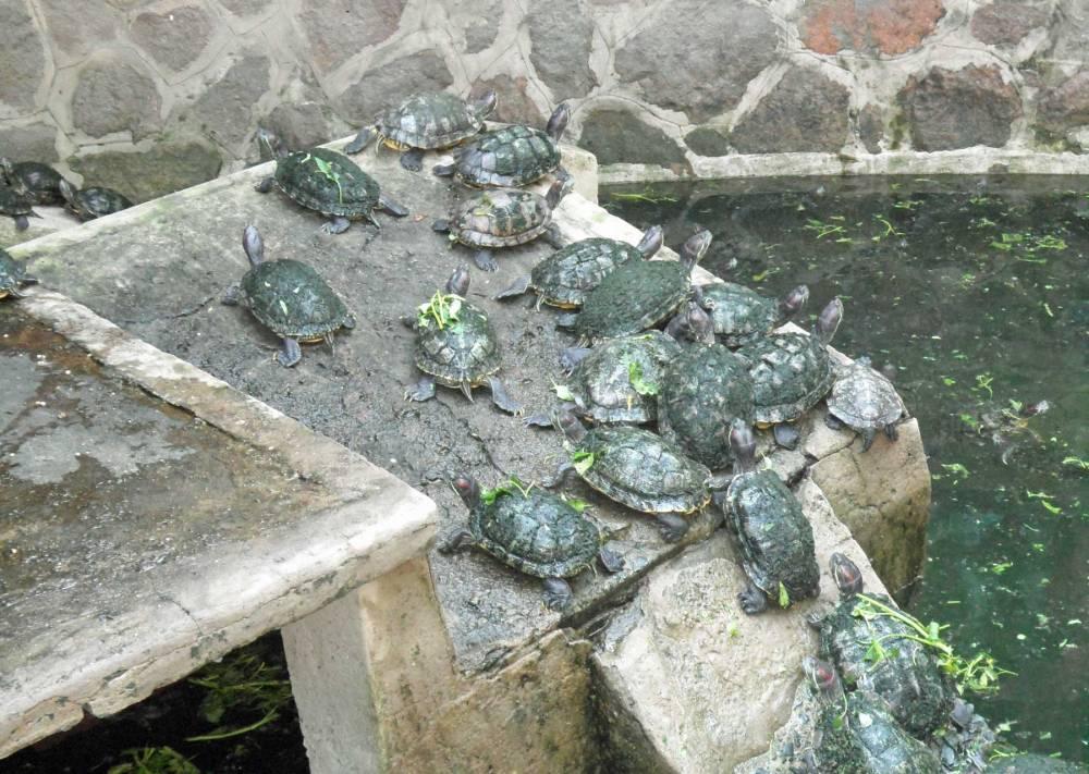 Pagode des Jadekaisers Schildkröten