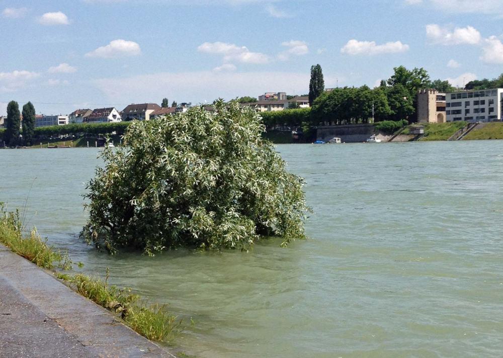 Hochwasser am Rhein in Basel