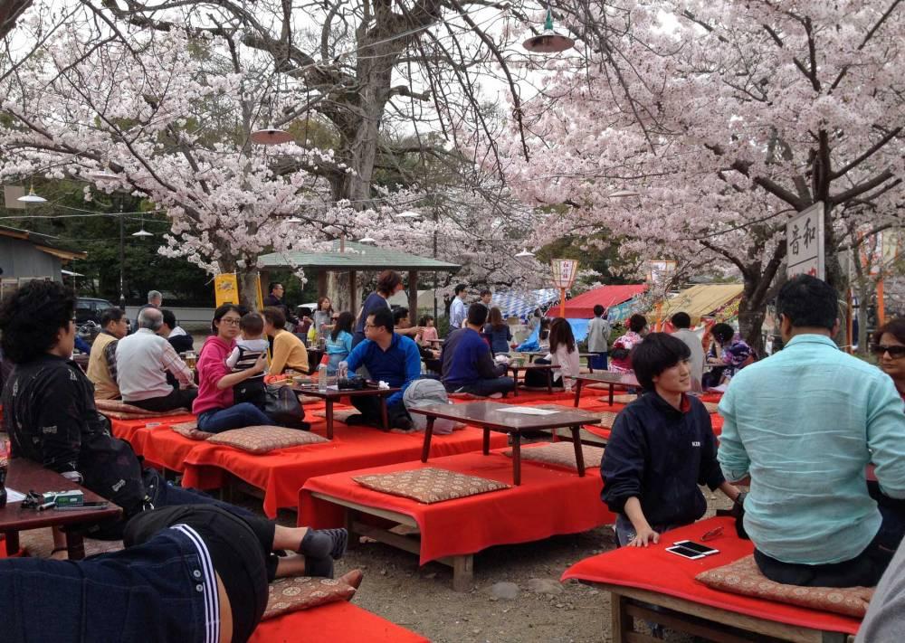 Kirschblüte in Kyoto