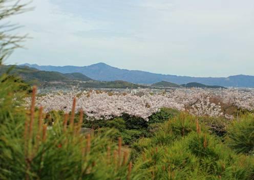 Die Gärten rund um Okochi Sanso sind wunderschön und so hoch gelegen, dass ihr einen tollen Blick über Kyoto habt.