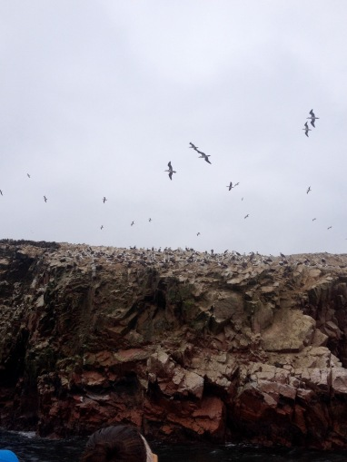 Hunderttausende Vögel nisten auf den Islas Ballestas in Peru.