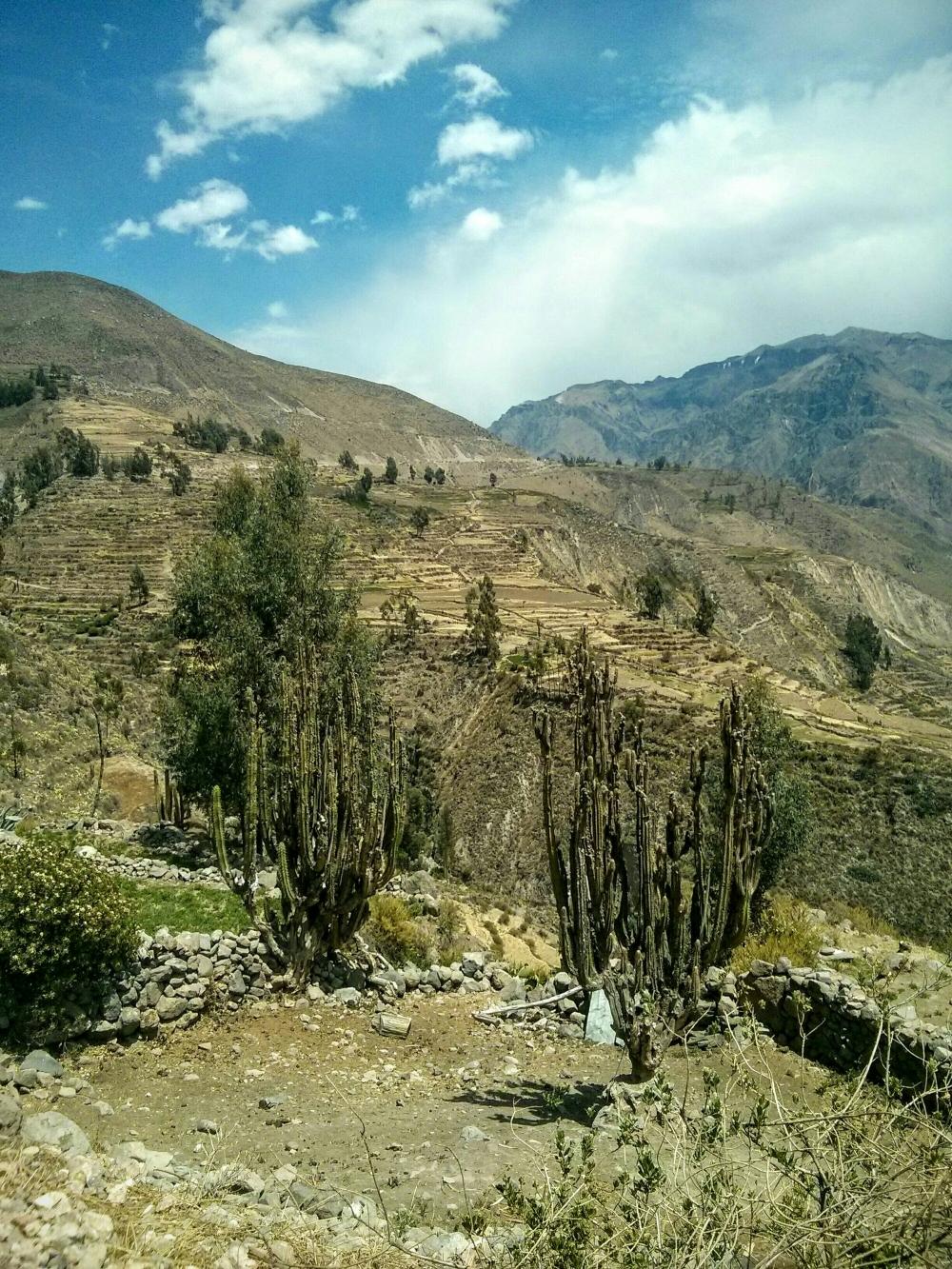 Aussicht im Colca Canyon