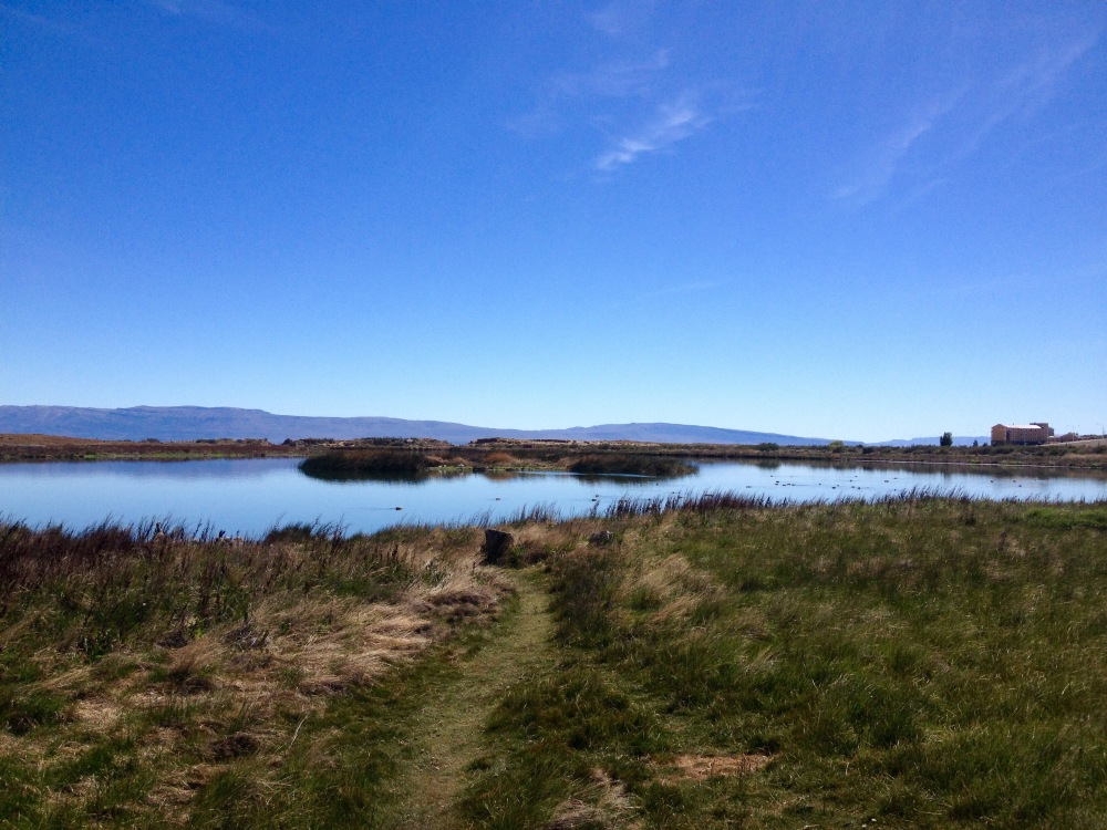 Naturreservat Laguna Nimez bei El Calafate