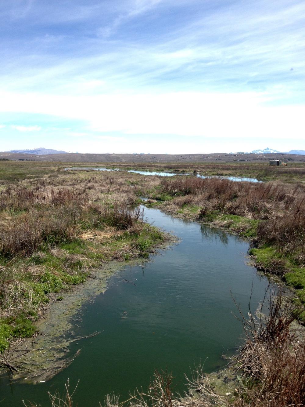 Laguna Nimez Naturreservat in Patagonien