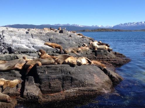 Robben auf einem Stein in Ushuaia