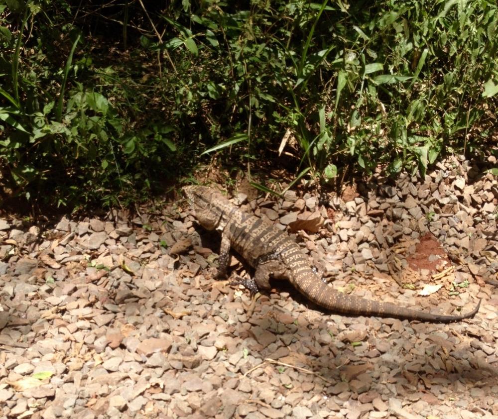 Nationalpark bei Iguazu in Argentinien