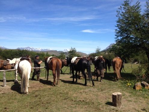 Patagonien Pferde