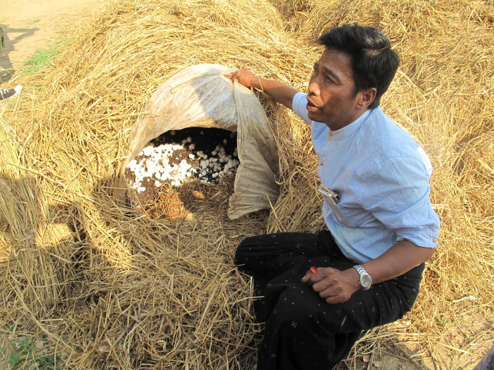 Pilzzucht in Myanmar