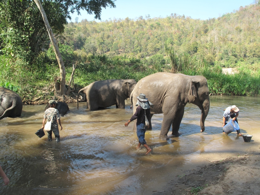 Elefanten baden im Fluss