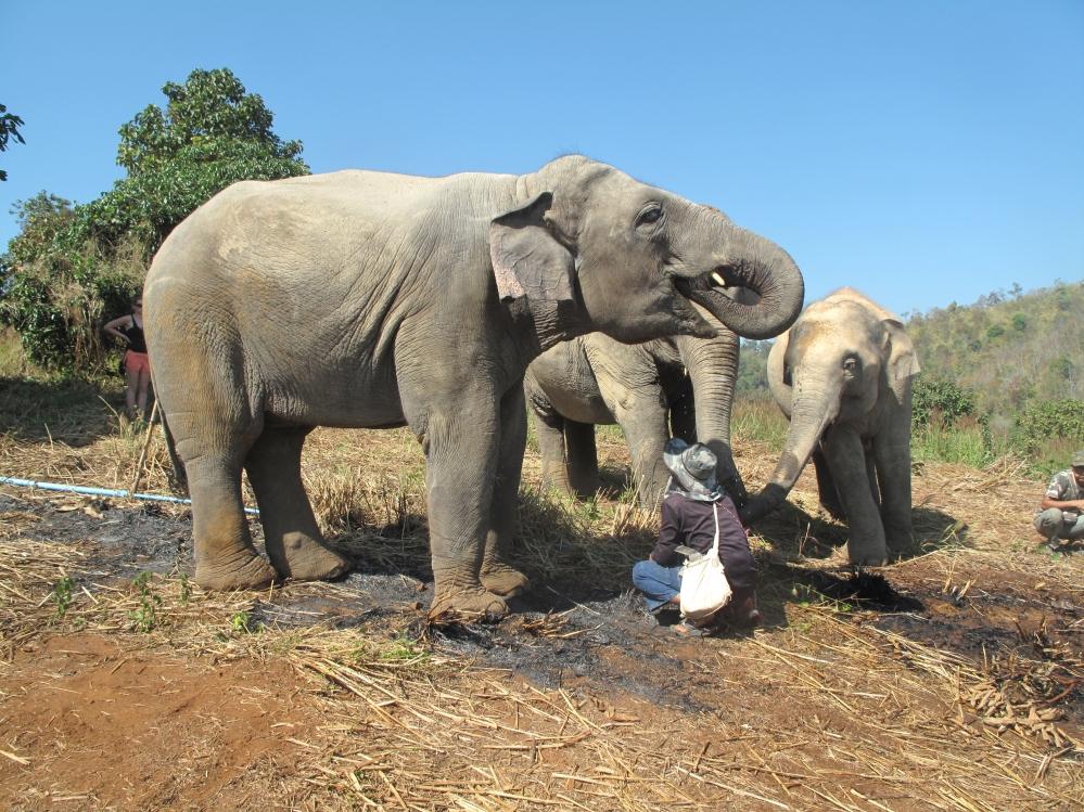 Elephant Nature Park Thailand Chiang Mai