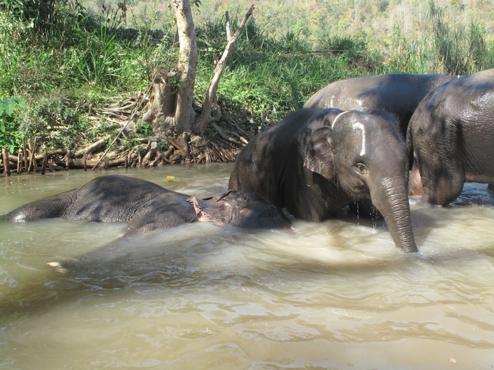 Elefantenpark Chiang Mai Thailand