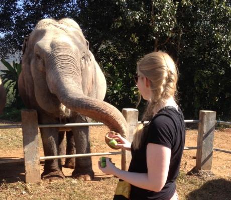 Die Elefanten kennen alle Tricks, um mit ihrem Rüssel Nahrung einzusammeln.